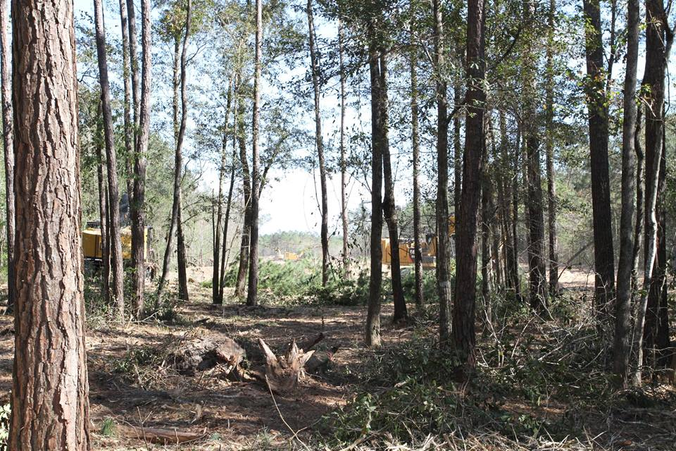 land clearing beaumont and lumberton, TX